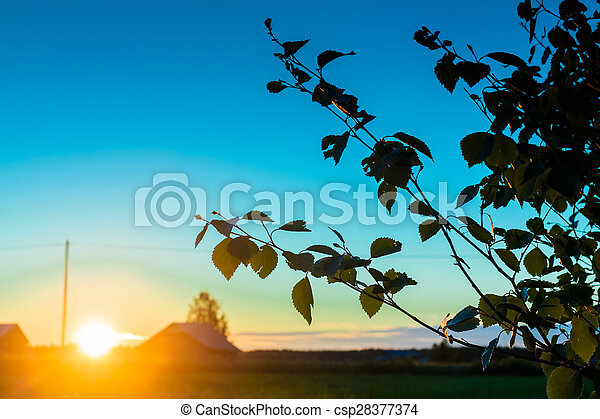Midnight Sun Setting Behind The Birch Leaves