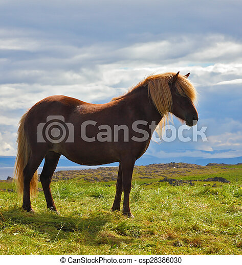 The horse with a light mane