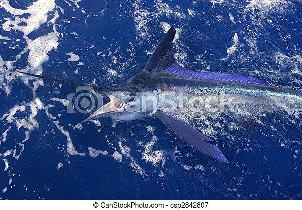 Atlantic white marlin big game sport fishing - csp2842807