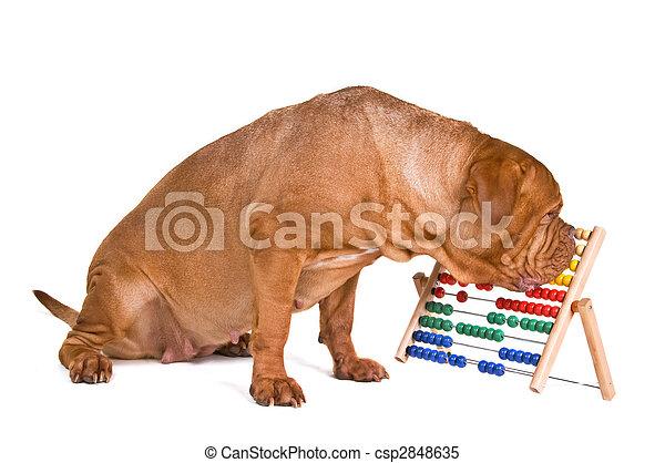 Dog Accounting - csp2848635