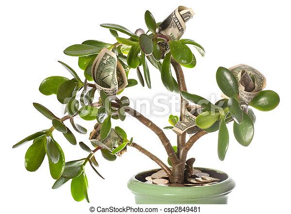 Banco de fotografia de ser planta flor riqueza forma for Plantas para el hogar feng shui