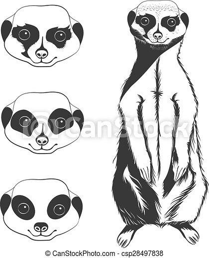 meerkat face outline meerkat clipart black and white meerkat clipart black and white