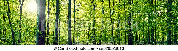 Beech forest panorama landscape - csp28523613