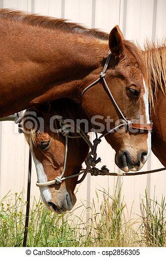 Sleepy Ranch Horses - csp2856305