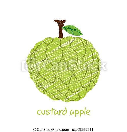Vector Clip Art of custard apple, sketch design - creative ...