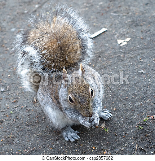 Eager squirrel - csp2857682