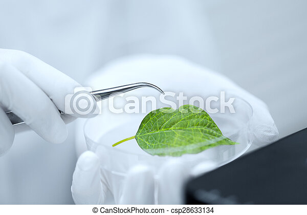 close up of hand with microscope and green leaf
