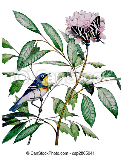 Northern Parula Zebra Swallowtail - csp2865041