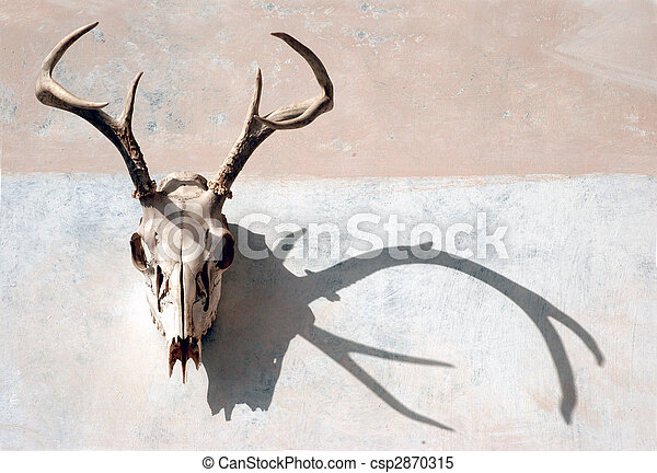Deer Skull and Shadow - csp2870315