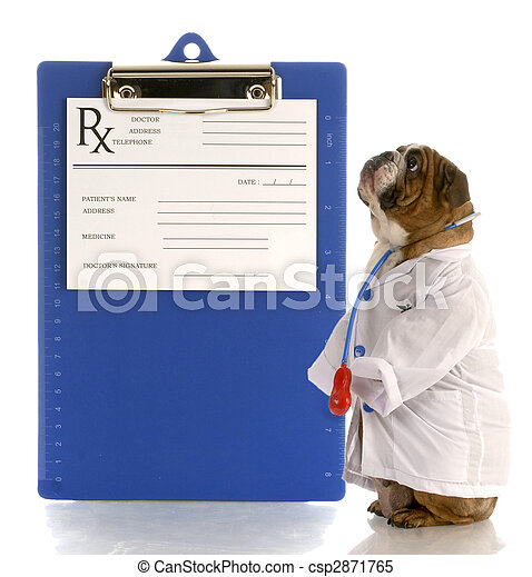 english bulldog dressed up as a doctor or veterinarian with prescription pad - csp2871765