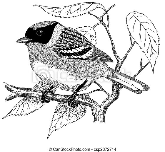 Bay-breasted Warbler - csp2872714