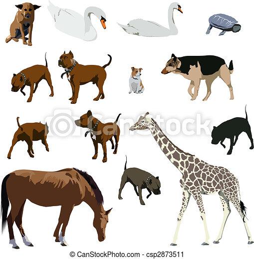 Animals - csp2873511