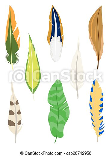 Set of feathers. Isolated on white.  - csp28742958