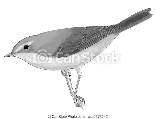 Wilsons Warbler Female - csp2878142