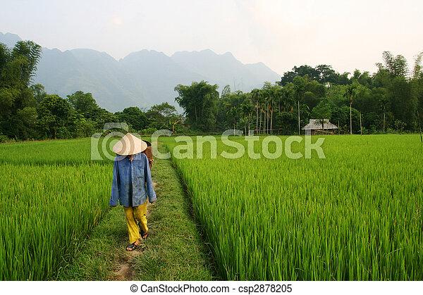 Vietnam - csp2878205