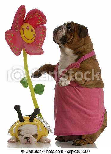 bulldog, anya,  -, méhek, angol, kutyus, madarak - csp2883560
