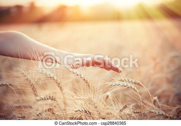 Female farmer hand over wheat field