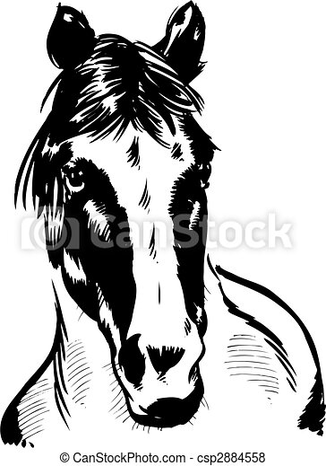 Wild horse portrait illustration - csp2884558