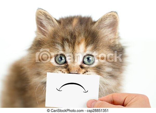 funny unhappy or sad cat isolated on white