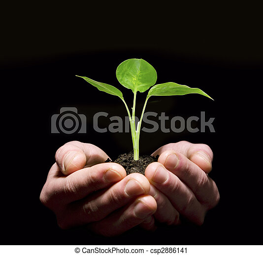 Hands holding sapling in soil - csp2886141