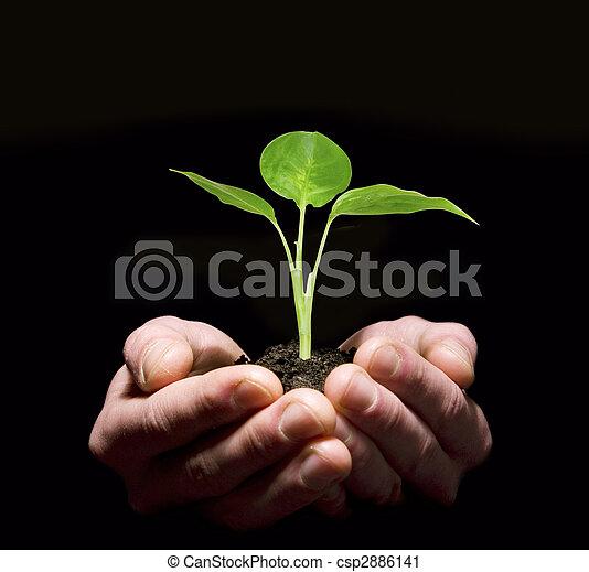 Hands holding sapling in soil - csp2886141