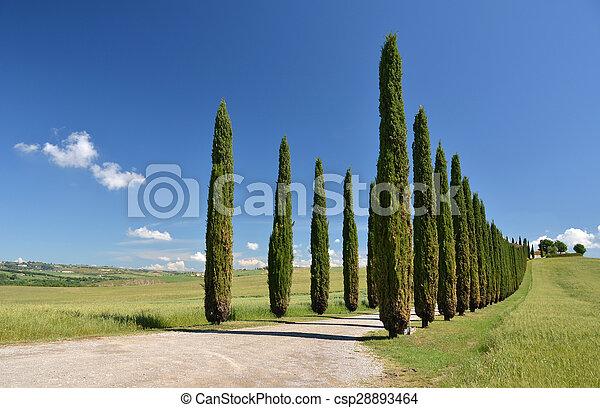 image de italie route cypr s toscane arbres rural long csp28893464 recherchez des. Black Bedroom Furniture Sets. Home Design Ideas