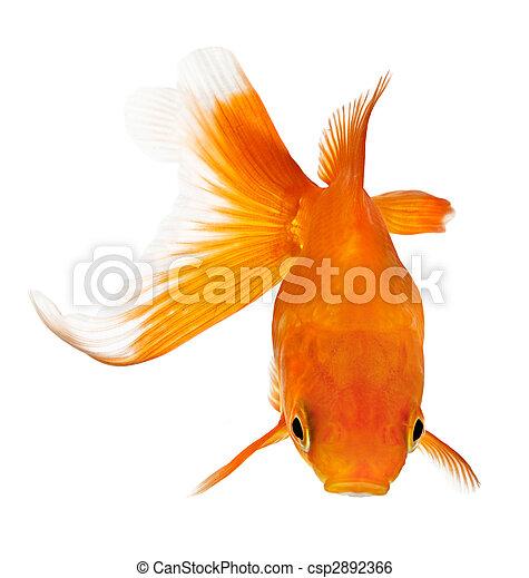 Image de poisson rouge au dessus vue closeup de a for Poisson rouge artificiel