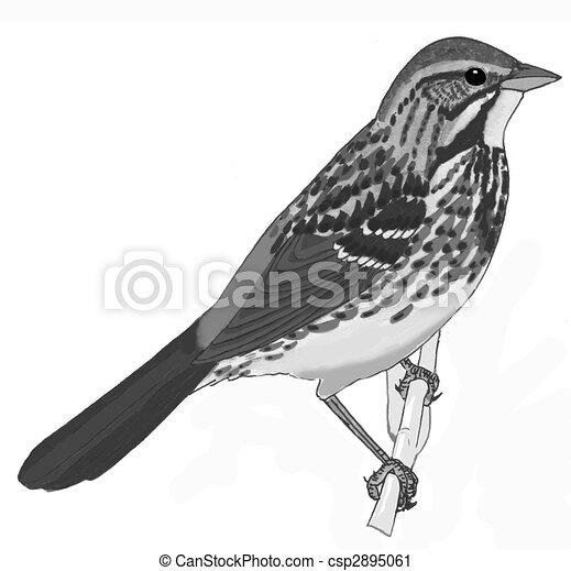 Song Sparrow - csp2895061
