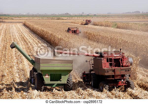 Harvesting Corn - csp2895172