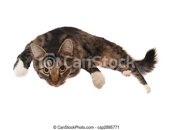 Lazy Cat - csp2895771