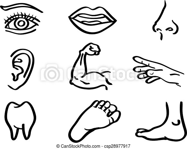 Vector Clip Art of Human Body Parts Vector Illustration in Line ...