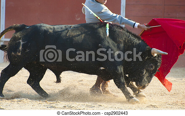 Fighting bull picture from Spain. Black bull - csp2902443
