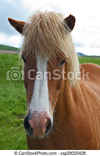 Portrait of red horse with light mane