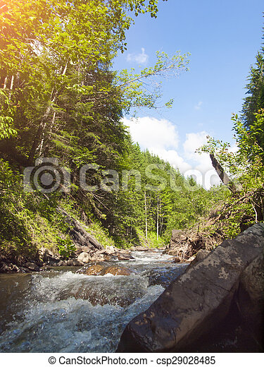 Mountain river flowing through the conifer forest.
