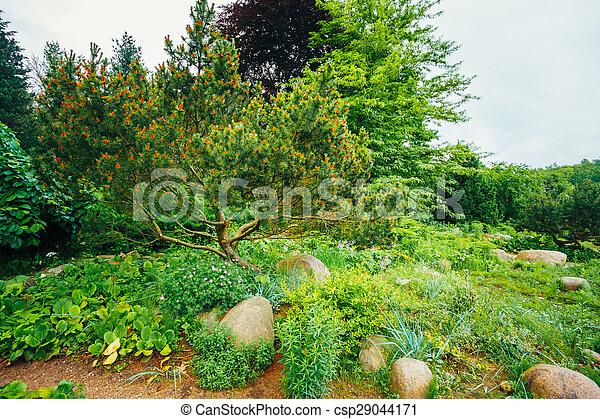 bilder von büsche, blumengarten, bäume, bett, gartengestaltung, Garten ideen