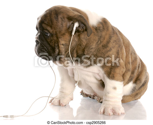 stock foto bulldogge junger hund tragen kopfh rer zuh ren musik reflexion wei es. Black Bedroom Furniture Sets. Home Design Ideas