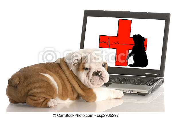 looking for animal health information online - csp2905297