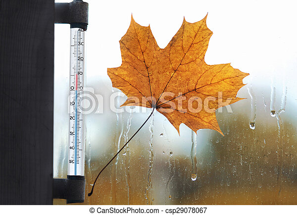 Meteorology, forecasting and autumn weather season concept - thermometer and yellow maple leaf stuck to wet the glass from the rain drops