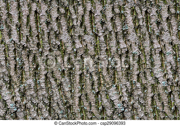 Bark of tree. Seamless Tileable Texture.