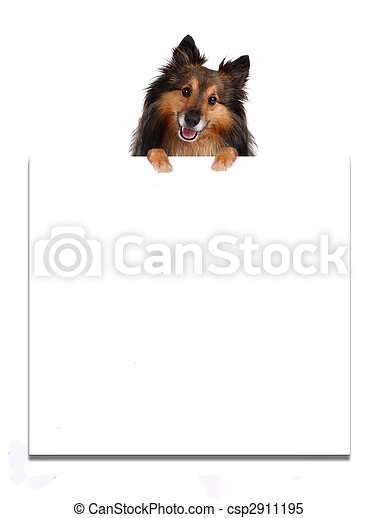 Sheltie on top of advertisement - csp2911195