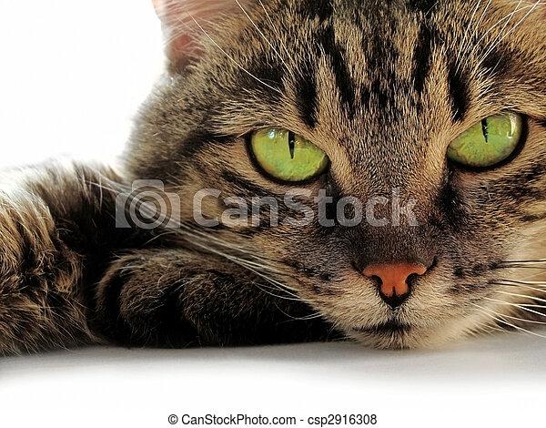 Gatos Dos Olhos Verdes Olhos Verdes Gato