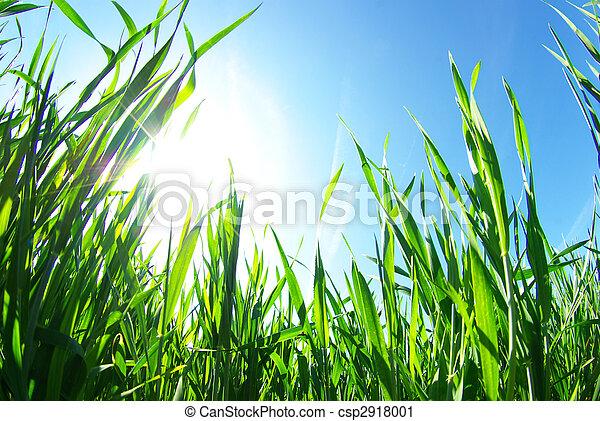 lawn            - csp2918001