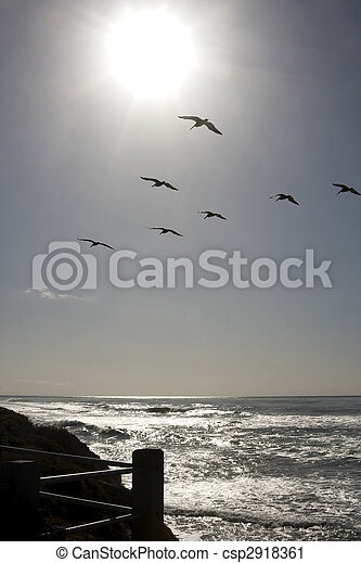 Sun Shining on Pacific Ocean with Seagulls - csp2918361