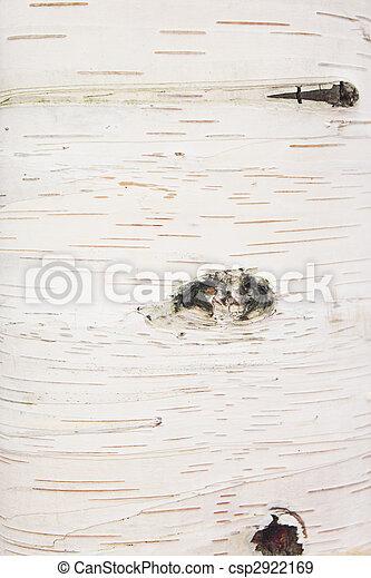 Texture, birch - csp2922169