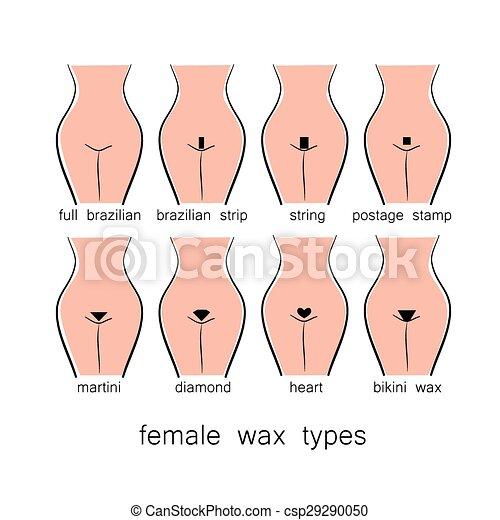 Clipart Vector Of Female Wax Types Bikini Design
