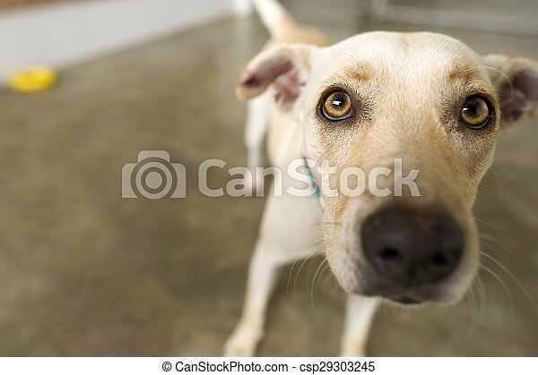 Funny dog is a cute little white dog with yellow eyes curiously looking to see what the heck is going on.