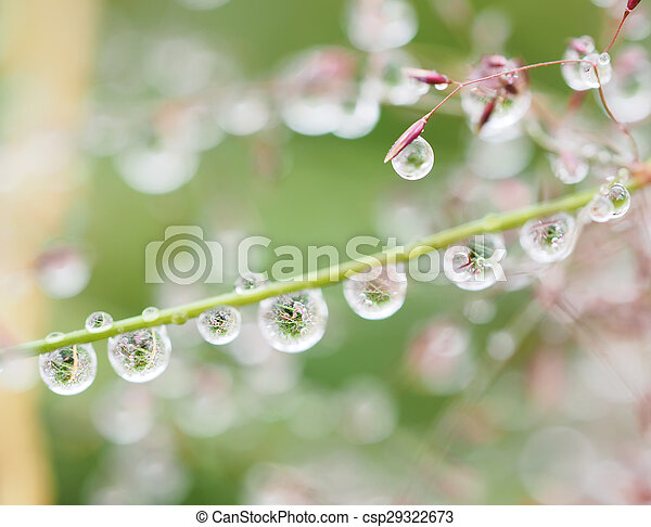 drops on the plants after rain
