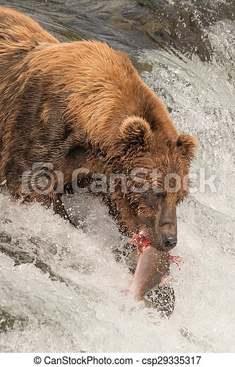 Close-up of bear with salmon in mouth