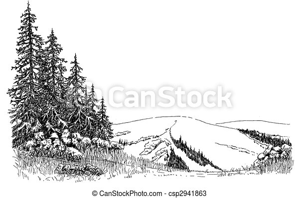 Spruce on a Hill - csp2941863