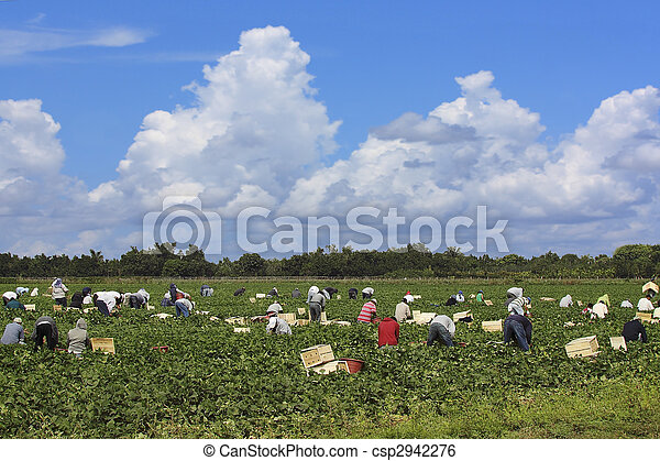 Agricultural workers - 2 - csp2942276